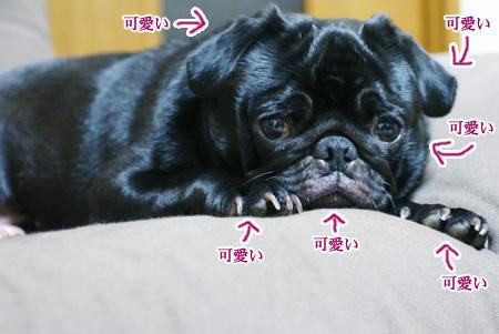 3kawakawa.JPG
