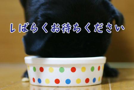6sukidesugohan.JPG