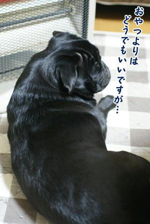 4nisyu-nen.JPG