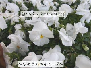 53e4a7e6.jpg