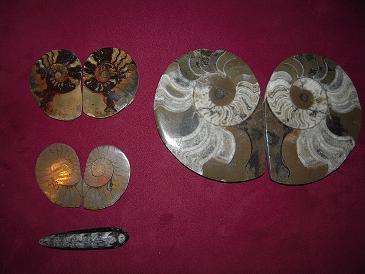 モロッコ産化石