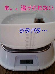カルーアミルク、体重をはかる2