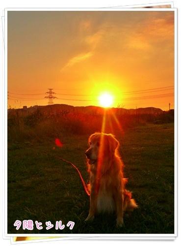 夕陽とシルク