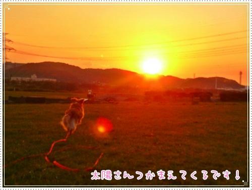 太陽さんをつかまえろぉ~