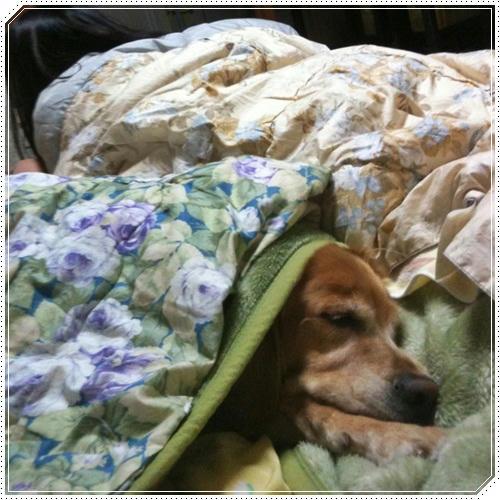 毛布さいこ~