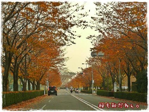 桜も秋です。