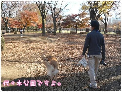 代々木公園ランラン♪
