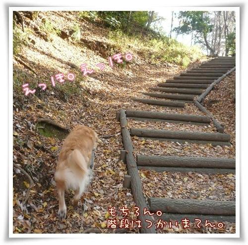 変な幅の階段はきらいです。