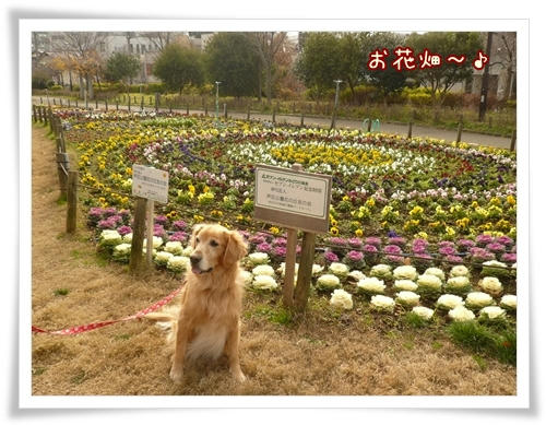 お花畑です。