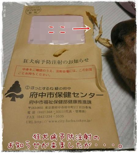 狂犬病予防注射のお知らせ