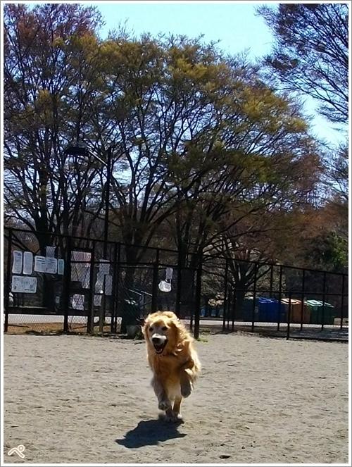 小金井公園♪