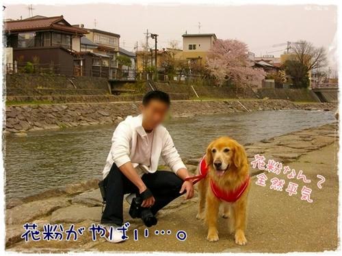 宮川におりてみた。