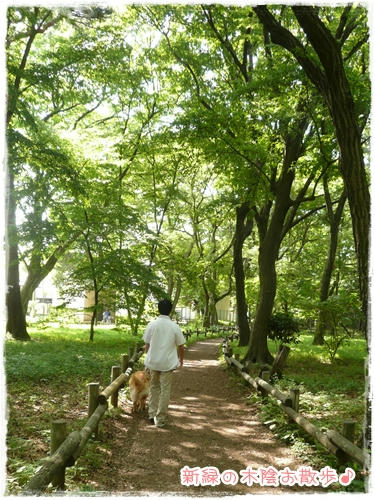 木陰のお散歩♪