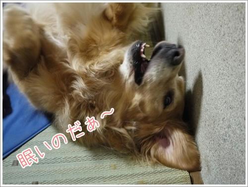 眠いのだぁ~