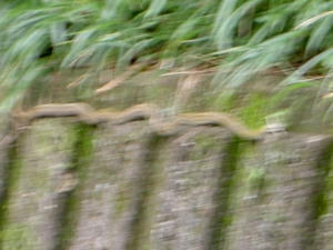蛇ぃぃぃ!!