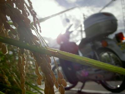 稲穂 × カブロウ
