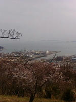 hanami8.jpg