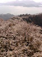 hanami2009.1.jpg