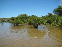 manguro-bu3.jpg