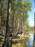 manguro-bu4.jpg