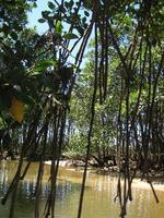 manguro-bu6.jpg