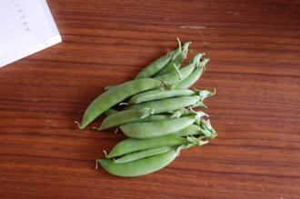 スナックエンドウ栽培