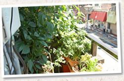 チャッピーのワンルームベランダ菜園
