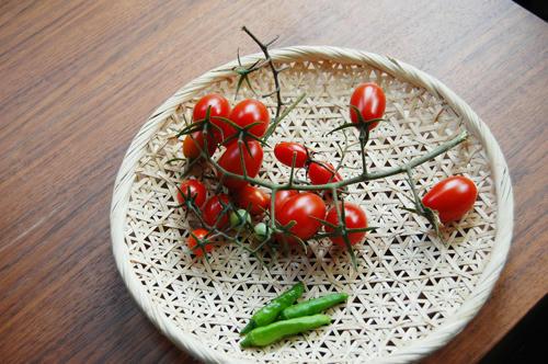 ベランダ菜園 シシトウ