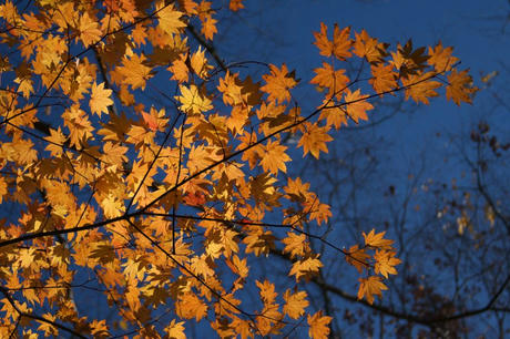 小原村の秋