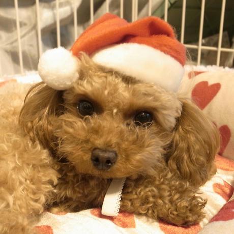 もうすぐクリスマス・・♪