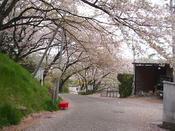 一週間前なら桜も絶景でしたが、、、、