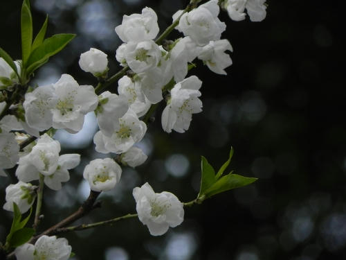 yusura.JPG