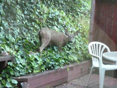 もの た 鹿 だっ