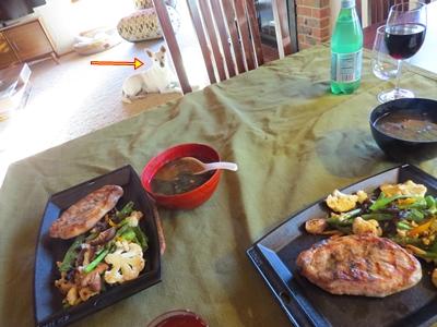 老犬用の食事サービス【San Franciscoのひとりごと...3】