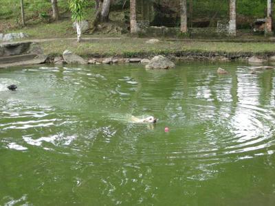 池で泳ぐ犬
