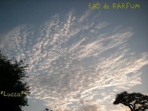 20090822f.jpg