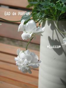 20100220.jpg