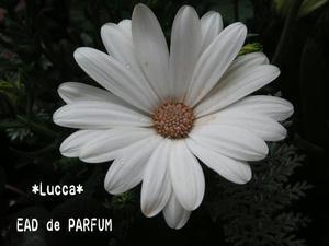 20100306c.jpg