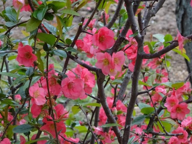 大和文華館の花