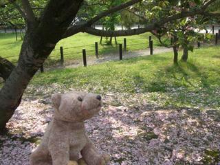 桜の散り終わった木の下で