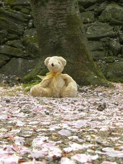 桜散った木の下でテディベアその1