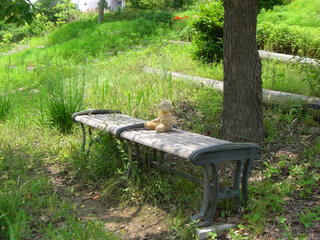 木の下で休むベア1
