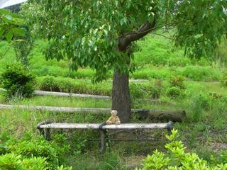 木の下で休むベア2