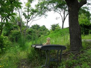 木の下で休むベア3