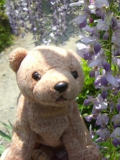 藤の花とテディベア