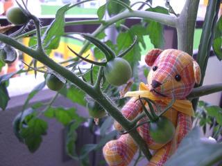 ミニトマトとテディベア3