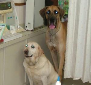 7月22日病院のメグとベン
