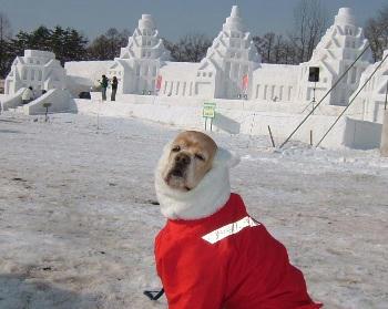 2月3日小岩井雪祭り♪イベントステージ