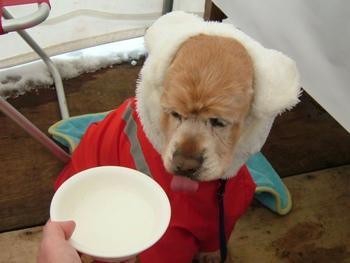 2月3日小岩井雪祭り♪ホットミルク