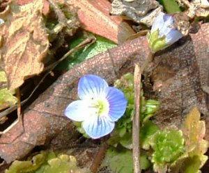 春の訪れ。。。野の花2